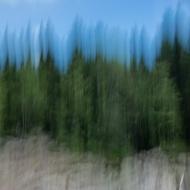 Forêt I