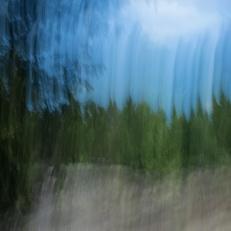 Forêt II